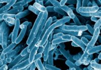 Scanning electron micrograph of Mycobacterium tuberculosis bacteria